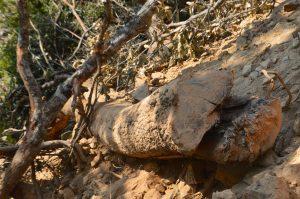 Despojo y devastacion en el Ejido de Xochisltahuaca_04