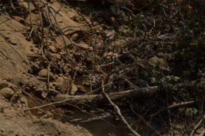 Despojo y devastacion en el Ejido de Xochisltahuaca_05